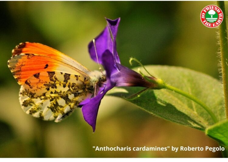 """Webinar on """"Status of butterflies and moths in the world. Butterfly-safe certified agriculture and Global Butterflies Census Program"""""""