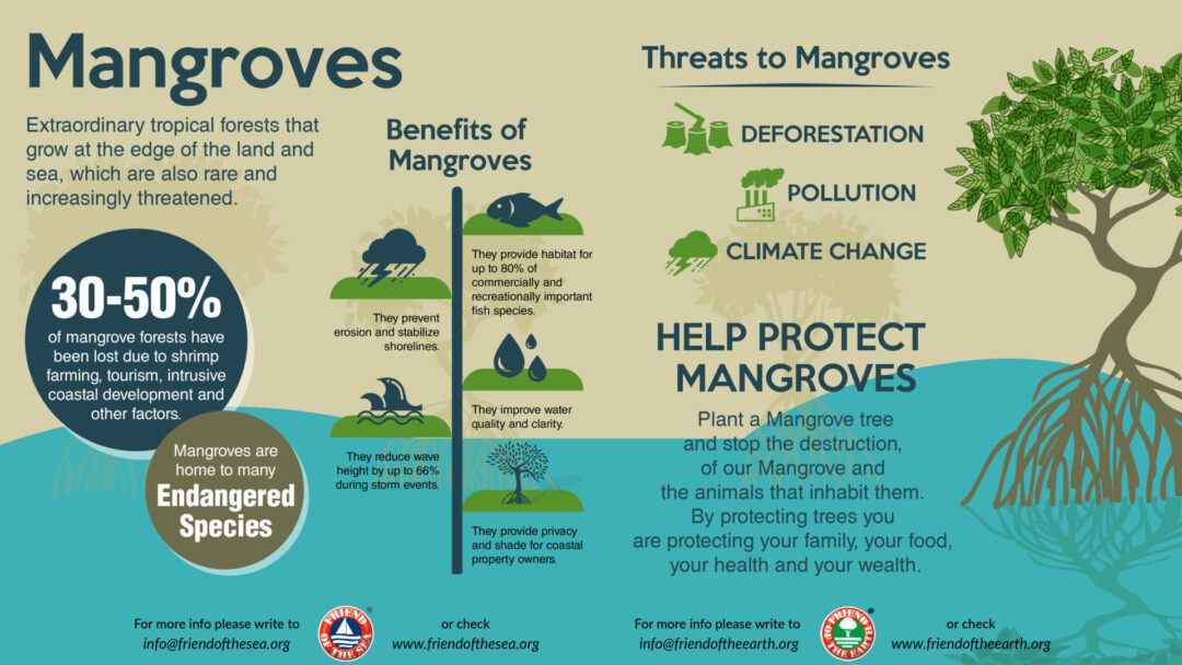 Save the MANGROVES