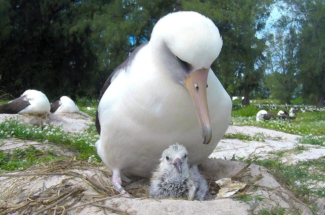 Salviamo gli Albatros