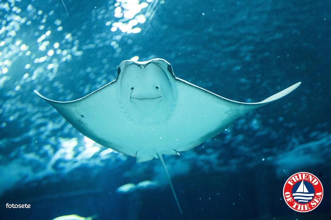Sustainable public aquaria and ornamental fish. AquaRio study post image