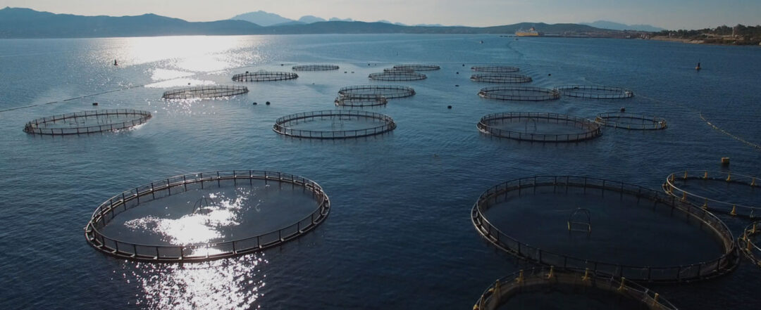 Friend of the Sea Sustainable Aquaculture Certification