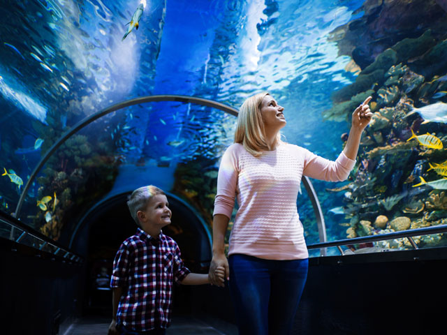 sustainable aquaria