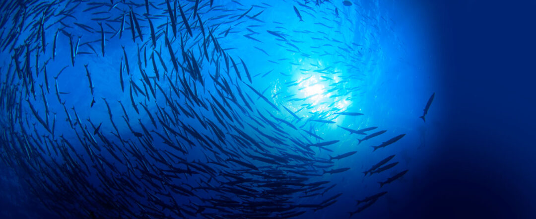 Sustainable Seafood Certification - Friend of the Sea