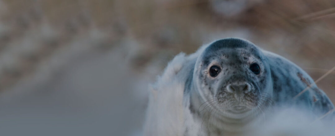 Monk Seal Conservation Project
