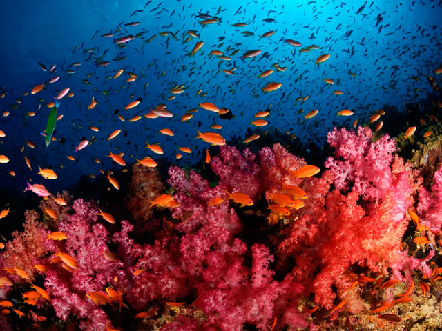 Reef Propagation