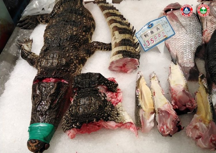 Friend of the Sea and Friend of the Earth Launch Petition to Ban China's Wildlife Food Markets post image