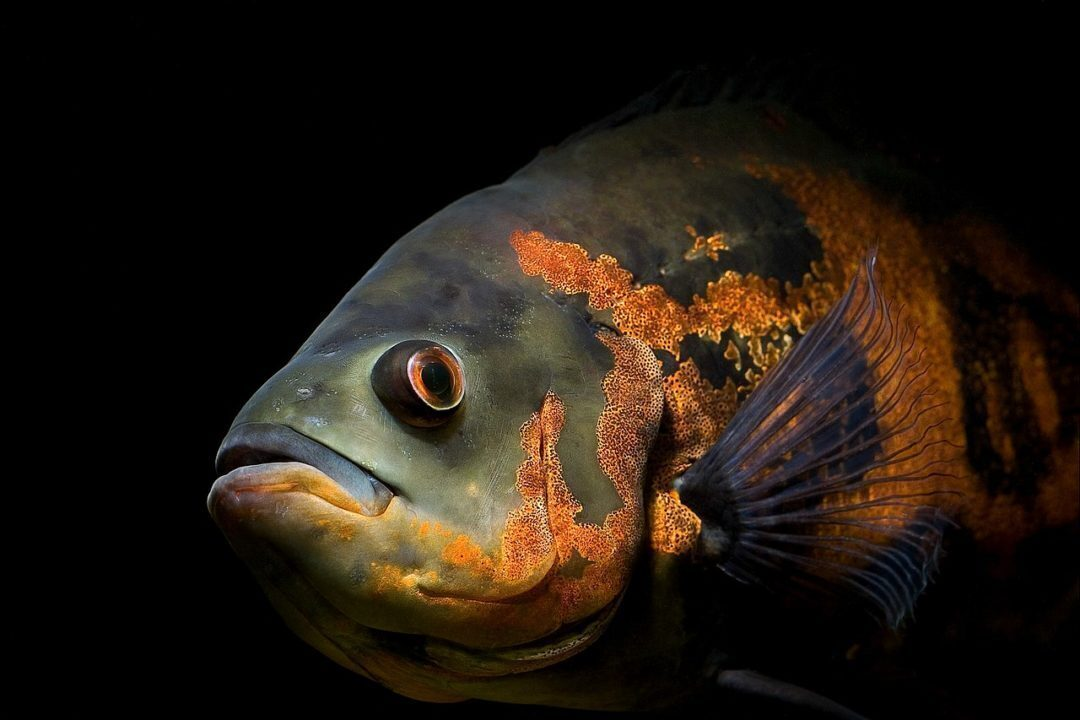 Save the FishwelfareSave the Fishwelfare