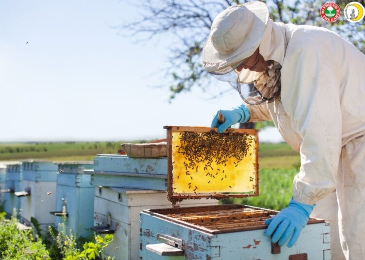 """Webinar on """"Sustainable Beekeeping. Case Study Raglio di Luna"""" 26th of May 2021 at 3:00 pm in Milan, CET"""