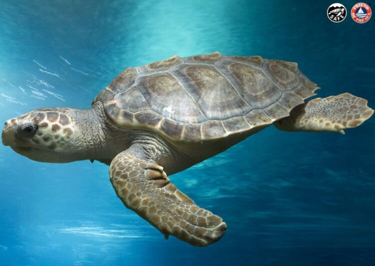 For World Turtle Day, Learn to Protect Sea Turtles With Friend of the Sea.