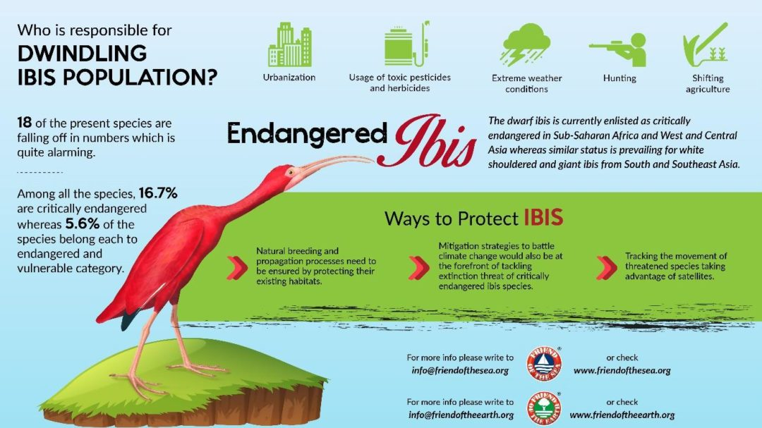 Save the Ibis
