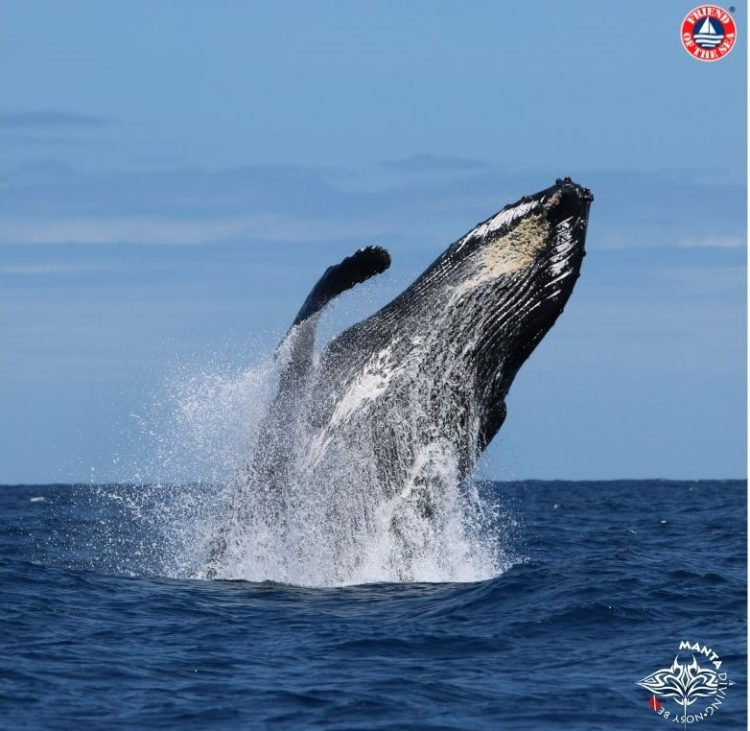 Manta Diving Nosy Be Achieves Pre-Certification for Friend of the Sea's Sustainable Dolphin and Whale Watching