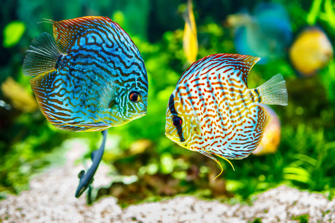 Sustainable Aquarium Campaign