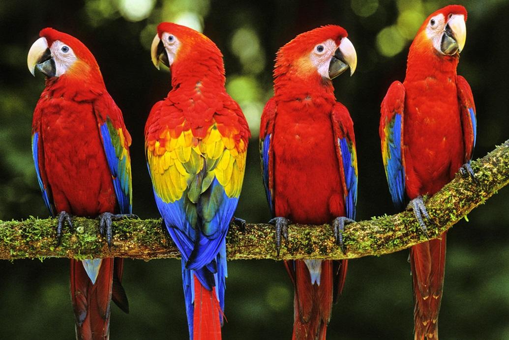 Save the Parrots
