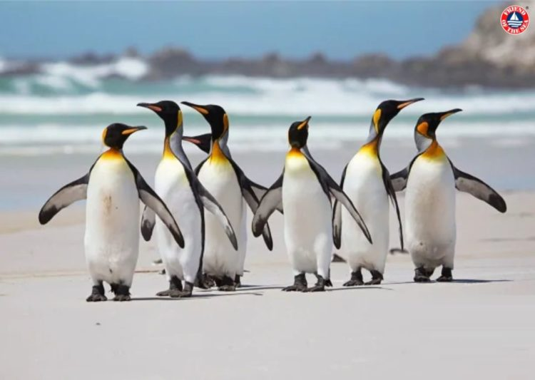 Friend of the Sea Launches Conservation Project to Protect Penguins post image