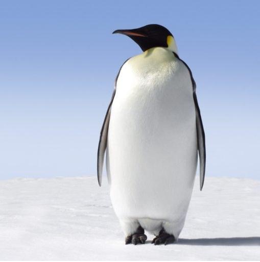 Salviamo i pinguini