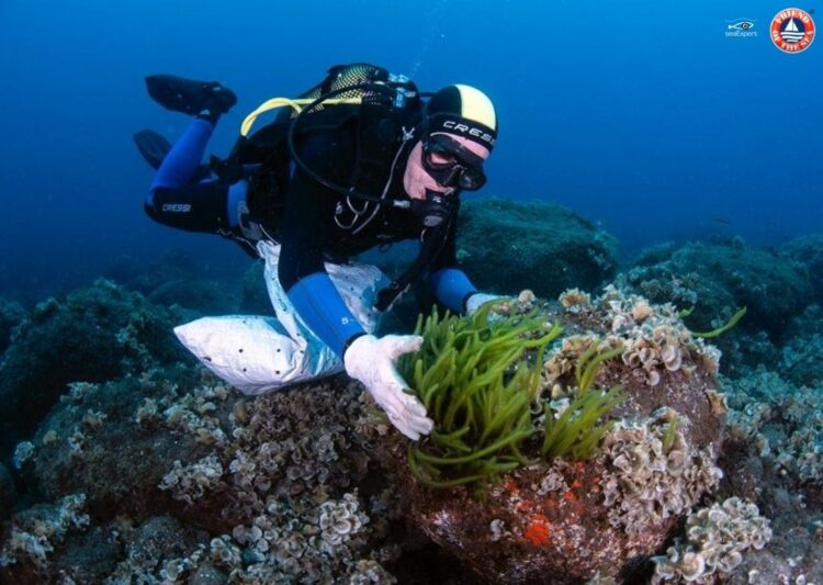 Friend of the Sea Certifies SeaExpert for Sustainable Seaweed Production in the Azores. post image