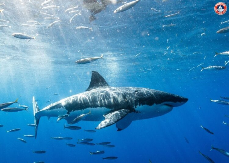 From Jaws to Shark Week: How Much Do You Know About Sharks? On Shark Awareness Day, Learn Why We Need to Protect Them. post image