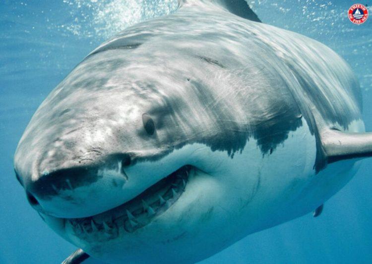 Friend of the Sea onora la Giornata degli Squali con attività atte a proteggerli. post image