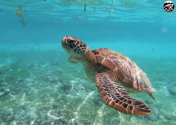 Petition Demands Protection of Sea Turtles in Commercial Fishing