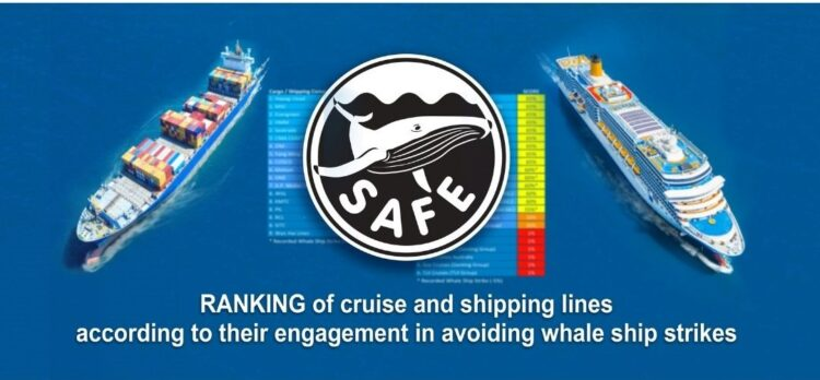 Friend of the Sea ranks shipping and cruise lines' engagement to reduce whale ship strikes. post image