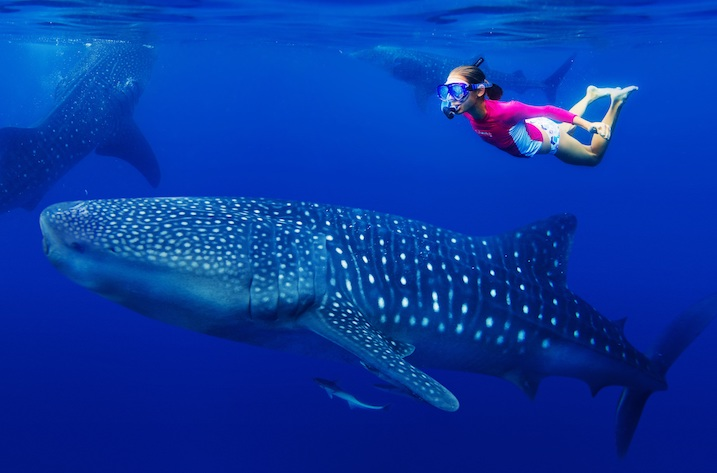 whale shark snorkelling fos sustainable certification